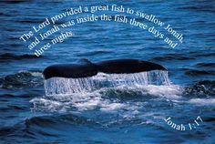 Jonah and the Big Fish Memory Verse - Jonah Jonah 1, Jonah And The Whale, Jonah Bible, Will And Testament, Whale Watching Tours, Wale, Memory Verse, Big Fish, Word Of God