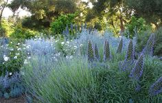 Margie Grace Garden Design Calimesa, CA - blue and white garden