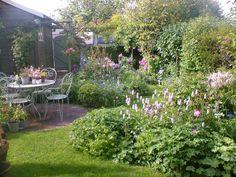 garden early July