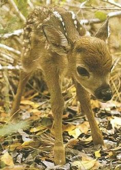 saw a tiny fawn like this in the forest once, I'll never forget it...