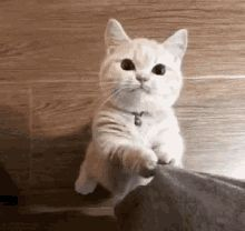 Things that make you go AWW! Like puppies, bunnies, babies, and so on. A place for really cute pictures and videos! Cute Cats, Funny Cats, Funny Animals, Cute Animals, Animal Pictures, Cute Pictures, Best Cat Gifs, Cat Stands, Right Meow