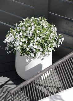 Contemporary interior design - More Interior Trends To Not Miss. Terrace Garden, Garden Pots, Patio Design, Garden Design, Plants Are Friends, Seasonal Flowers, Garden Styles, Garden Inspiration, Beautiful Gardens