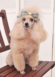 セカンド・キュートパピー --愛犬の友 ヘアスタイルカタログ--