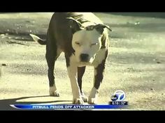 A Gentle Pit Bull Saves His Owner By Fending Off An Attacker!
