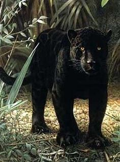 """Beautiful...Black Panther Totem ~The panther symbolizes courage, strength, and assertiveness. People with this totem are often solitary, comfortable in their own territory. Many people with panther totems are born already experiencing clairaudience or """"clear hearing"""" - the psychic sense that allows them to hear messages from the spirit world. Pather's primary duty is to help people face fears of death and darkness, enabling them to open up further to their psychic senses."""