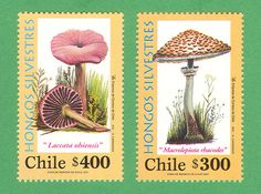 Mushroom postage stamps from Chile.