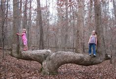 What is an Indian Marker Tree?  (video on page 2)The following article was written by Steve Houser and published in the Neil Sperry e-Gardens news www.neilsperry.comHistorically, living in complete harmony with nature has been a way of life for the American Indian.  They relied on Nature for all their needs.  Many years ago, traveling from place to place required good navigational skills, directions along the way, and a method to mark common trails.  American Indians used trees to not only…