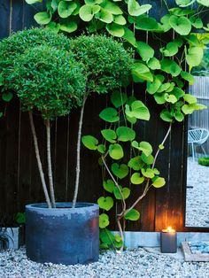 Japanese inspired garden in the south of Sweden where garden designer Anders Mårtensson shows his private garden. Inspiration to the garden comes from woodland and asian aesthetics. Container Plants, Container Gardening, Pot Jardin, Green Garden, Black Garden, Gras, Garden Planters, Garden Inspiration, Garden Landscaping