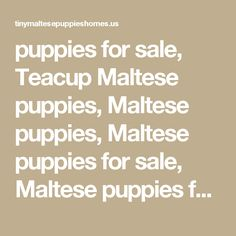 puppies for sale, Teacup Maltese puppies, Maltese puppies, Maltese puppies for sale, Maltese puppies for adoption, bulldog puppies, Bulldog Puppies for sale, Maltese for sale, Maltese for adoption, Malteses, Maltese puppy, Bulldog puppy Maltese puppies for free adoption,
