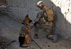 Military dogs DON'T DO IT FOR TREATS... TRUE LOVE!