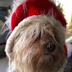 Christmas Havanais