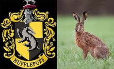 You got: You're a Hufflepuff with a brown hare patronus! | Can We Guess Your Patronus And What Hogwarts House You Belong To