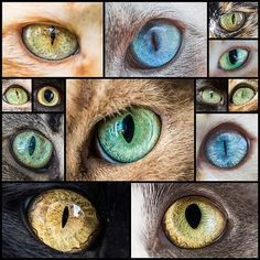 Mesmerizing-Macro-Photos-of-Cats'-Eyes-by-Andrew-Marttila---My-Modern-Met - Mesmerizing-Macro-Photos-of-Cats'-Eyes-by-Andrew-Marttila—My-Modern-Met Informations About Mesme - Cat Drawing Tutorial, Big Cat Family, Cat Eye Colors, Crazy Eyes, Outline Drawings, Dragon Eye, Realistic Paintings, Eye Art, Fauna