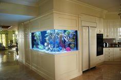 Corner wall aquarium #aquarium #fishtank #forthehome