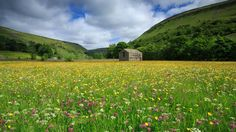 Hay meadow near Muker, Swaledale, taken by James Pang.
