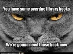 Stern librarian cat // TOO FUNNY! (Saving this in case I ever actually get my masters and become a school librarian! Library Memes, Library Books, Library Ideas, Library Posters, Library Signs, Library Quotes, Library Organization, Library Programs, I Love Coffee