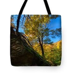 Vermonts Smugglers Notch Tree Living In Rock Tote Bag by Jeff Folger
