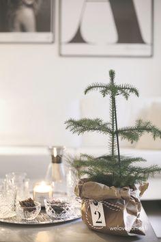 Pieni joulukuusi2 (1 of 1)