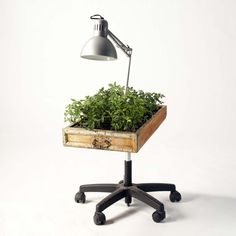Google Image Result for http://www.shelterness.com/pictures/using-recycled-furniture-as-planters-5.jpg