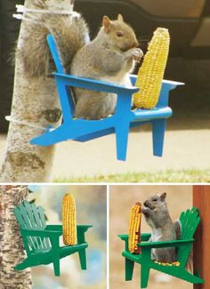 Nuts To Them! 8 Brilliant Backyard Squirrel Feeders | WebEcoist More