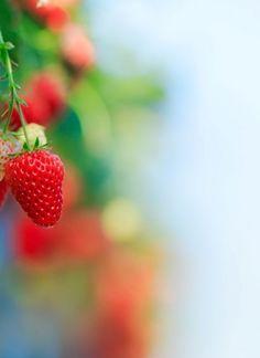 7 ακαταμάχητοι μεζέδες για μπίρα | Έθνος Strawberry, Fruit, Food, Essen, Strawberry Fruit, Meals, Strawberries, Yemek, Eten