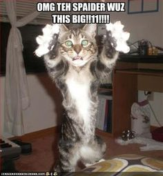 Funny Cats with Guns | Funny cat pictures, cute cat pictures, LOLcat pictures and funny ...