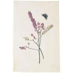 Watercolour - Daphne mezereum with butterfly