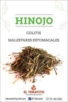 Plantas medicinales -  Hinojo