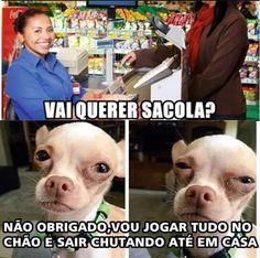 Read Só 192 from the story Só Coisas Legais 3 (MEMES) by CDoceMel (Mel) with reads. Funny Reaction Pictures, Funny Photos, Memes Humor, Funny Animal Memes, Funny Animals, Funny Fails, Funny Jokes, Haha Meme, Bts Imagine