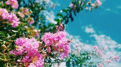 Flores. Hernandarias-Paraguay