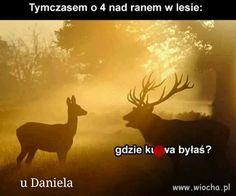 Wiocha.pl - absurdy internetu Wtf Funny, Memes, Moose Art, Lol, Humor, Animals, Haha, Fotografia, Animales