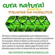 Cura natural para los piquetes de mosquitos