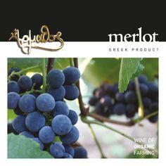 Merlot of Organic Farming Merlot Βιολογικής Καλλιέργειας