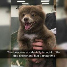"Can you imagine working at a dog shelter and someone brings in a bear cub and you're just like ""uhhh houston we have a problem"""
