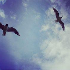 42 likerklikk, 0 kommentarer – Camilla (@siljecamillav) på Instagram Whale, Social Media, Instagram, Animals, Whales, Animales, Animaux, Animal, Social Networks