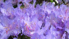 in purple - null My Photos, Purple, Plants, Jewelry, Jewlery, Jewerly, Schmuck, Jewels, Plant