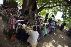 miray daner Çınar Ağacı