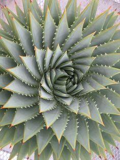 farm4.staticflickr.com 3123 2915036153_fa0bb8ee64_o.jpg