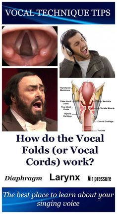 How do the vocal cords (vocal folds) work?