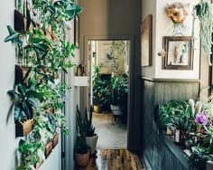 Expert Tips How To Care For House Plants Guide - Home Professional Decoration Plant Guide, House Plant Care, Cute Dorm Rooms, Home Trends, Home Look, Decorating Blogs, Indoor Plants, Garden Plants, Indoor Gardening