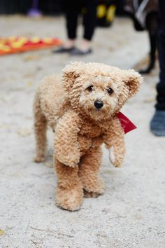 Need inspiration for how to dress your pet this Halloween? We've got the best costumes from NYC's famous dog parade.