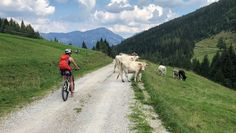Új kerékpárutak Reiteralmon és Hauser Kaiblingon Jets, Animals, Animales, Animaux, Animal, Animais, Fighter Jets