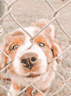 Super Cute Puppies, Cute Baby Dogs, Cute Little Puppies, Cute Funny Dogs, Cute Funny Animals, Cute Puppy Pics, Cute Pics, Cute Wild Animals, Pretty Animals