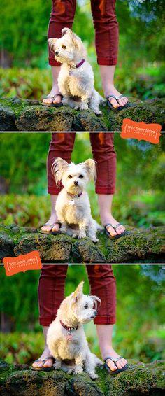 Peanut!  www.wetnosefotos.com