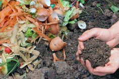 Scraps and Finished Compost | GardenersPath.com