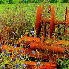 chicory, rusty old farm equipment Tractor Implements, Succession Planning, Old Farm Equipment, Old Tractors, Down On The Farm, Farms Living, Rusty Metal, Farm Life, Mother Earth