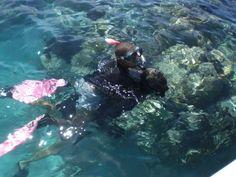 Diving the Caribbean Sea.