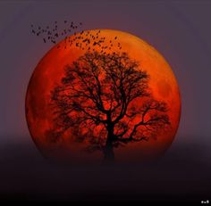 The melancholic rising of the blood moon. Moon Pictures, Nature Pictures, Beautiful Pictures, Beautiful Moon, Beautiful World, Shoot The Moon, To Infinity And Beyond, Nature Scenes, Backgrounds