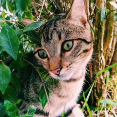 Se que puede parecer cruel pero hoy el Michiñas volverá sin huevos para casa...  #vscocam #vsco #galicia #pontevedra #love #lovely #igspain #visitspain #igersspain #hallazgosemanal #animal #cat