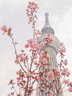 I <3 Japon.